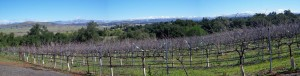 Panoramic view of the Cabernet Franc vineyard as seen from the tasting veranda.