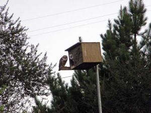 WNR_owls_enh